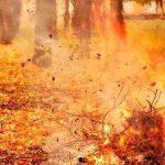 Штраф за сжигание листвы в Макеевке