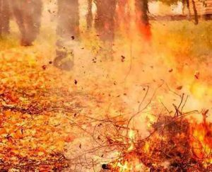 Штраф за сжигание листвы в Макеевке в 2018 году