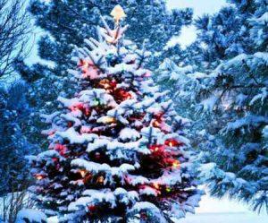 Открытие новогодних ёлок в Макеевке по районам в 2018 году