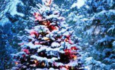 Открытие новогодних ёлок в Макеевке